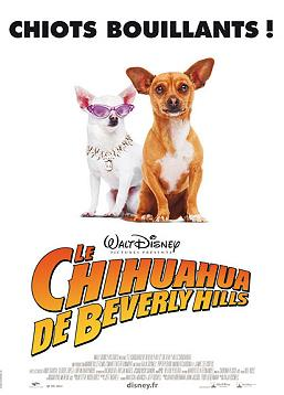 photo Le Chihuahua de Beverly Hills